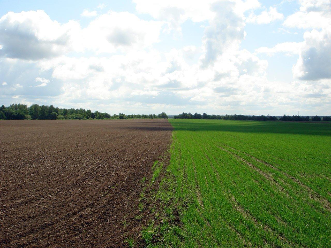 земельные паи сельхозназначения